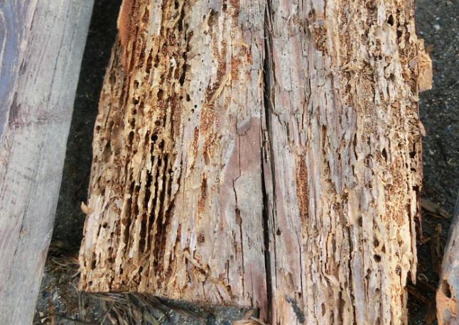 新築時の適切な「シロアリ対策」|防蟻剤だけでは被害を防げない!?