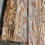 新築時の適切な「シロアリ対策」|防蟻剤だけではシロアリ被害を防げない!?【地震・災害・シロアリ対策②】