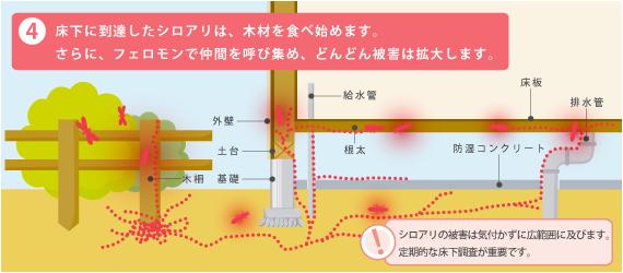 シロアリ侵入路はシロアリの特性上決まっている(防蟻剤だけでは不十分)